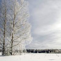 Окрестности деревни Колобовщина