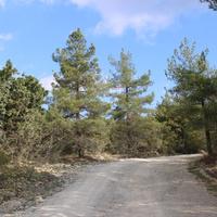 Светлый. Дорога на гору Нексис.