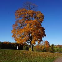 Одиночно стоящее дерево.