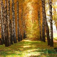 Осенние краски в парке...