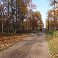 В парке Александрия.Общедоступная дорожка к Финскому заливу.