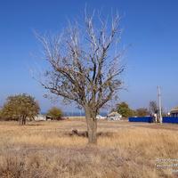 Дерево в центре пустыря