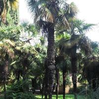 п.Лазаревское, в парке