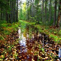 Дождливая осень. с. Нижний Воч.