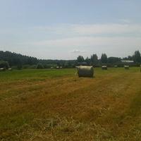 Убранное в рулоны сено на поле в деревне Воронинская