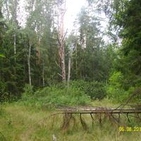 В лесу за селом Шатур у тропы к селу Большое Гридино