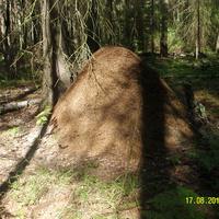 Огромный муравейник за селом Шатур у тропы к селу Большое Гридино