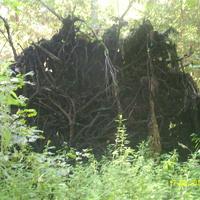 Выворотень в лесу за селом Шатур у тропы к селу Большое Гридино