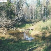 Река Трубинка к С-З от посёлка Бакшеево