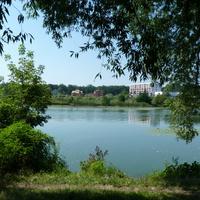 Берез реки Рось