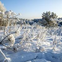 Урочище Замедянцы Слободского района Кировской области