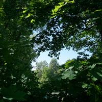 Природа в парке