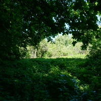 В усадебном парке Троице-Лобанове