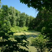 В парке, нижний пруд