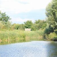 Сельский пруд