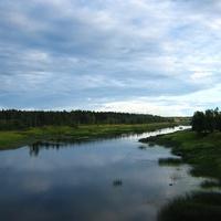 Река Молога,Пестовский район, Новгородская область.