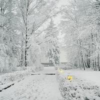 На территории усадьбы Чайковского