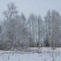 Окрестности деревни Лашино Куменского района Кировской области
