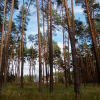Призамковый лес