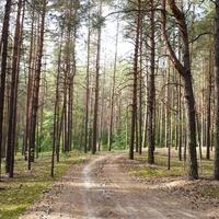 Лес рядом с селом