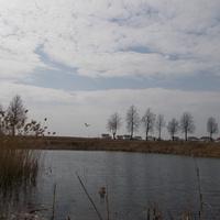 Пруд, ул.Строителей, весна
