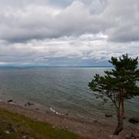 Берез Байкала