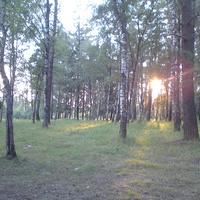 В лесу за Солянкой.Летний закат.