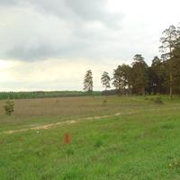 Опушка леса при выезде из Хорлово в сторону Фосфоритного в 2008 году.