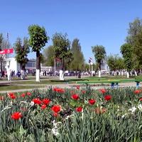 Цветы воинам-афганцам.