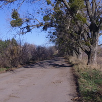 Дорога по греблі ставка