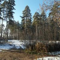 Небольшой лес в Ногинске