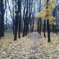 Дорога  з Гречківки до  Веселого Кута.