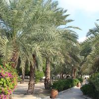 Национальный музей Бахрейна. Парк.