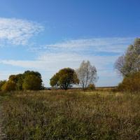 Окраина поля