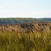Осень, поле