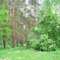 Майский лес.