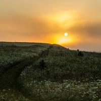 «Утренняя прогулка»