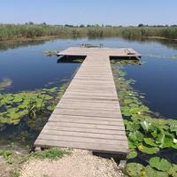 На озері Криве, що біля міста.