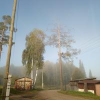 Грибной туман в посёлке.