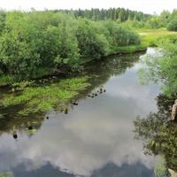 Река Волчанка