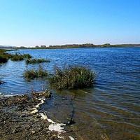 Берег реки Ока