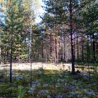 Осенний лес в окрестностях Новоильинска.