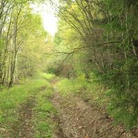 Лес в окресностях