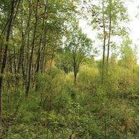 Вырубка в лесу