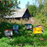 Начинающие пчеловоды