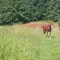 Лошадь на папасе.