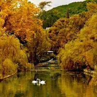 Новый Афон . Парк с лебедями