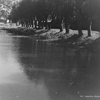 Коренево, Кореневский пруд, 1955 г.