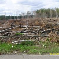 После пожара на карьерах между Кервой и Долгушами