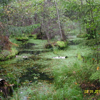 Лесные болотинки за Красными Лугами